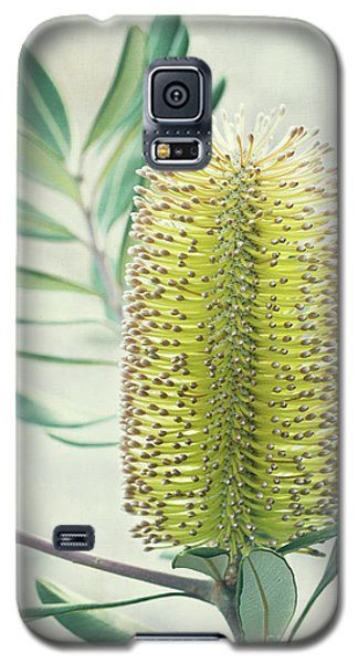 Galaxy S5 Case featuring the photograph Banksia by Linda Lees