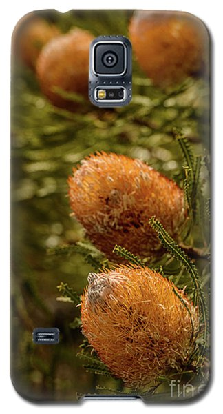 Galaxy S5 Case featuring the photograph Banksia by Werner Padarin