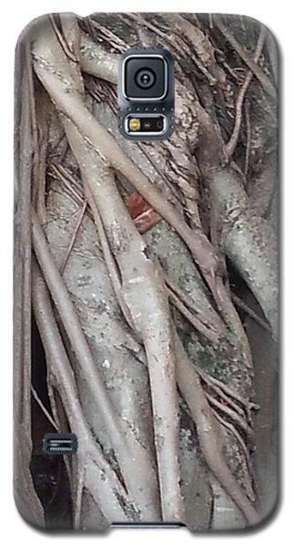 Banyan In Maui Galaxy S5 Case