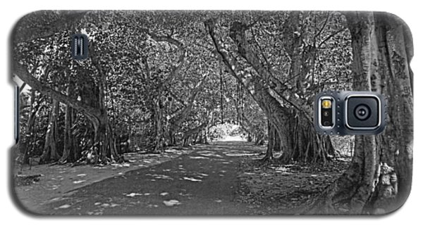 Banyan Street 2 Galaxy S5 Case by HH Photography of Florida