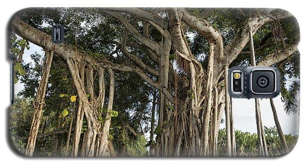 Banyan Tree At Bonnet House Galaxy S5 Case