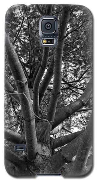 Bare Tree Galaxy S5 Case