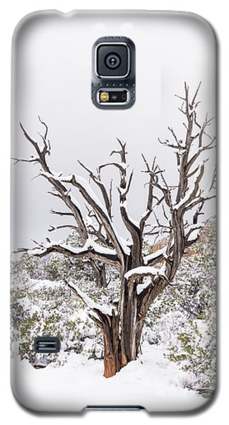 Galaxy S5 Case featuring the photograph Bark And White by Laura Pratt