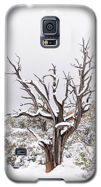 Bark And White Galaxy S5 Case