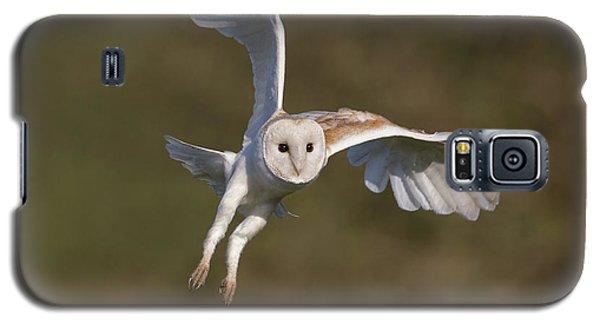 Barn Owl Cornering Galaxy S5 Case