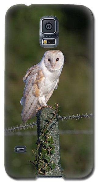 Barn Owl On Ivy Post Galaxy S5 Case