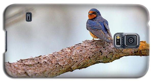 Barn Swallow On Assateague Island Galaxy S5 Case by Rick Berk