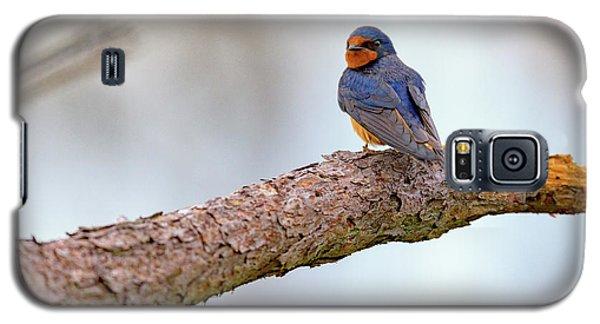 Barn Swallow On Assateague Island Galaxy S5 Case