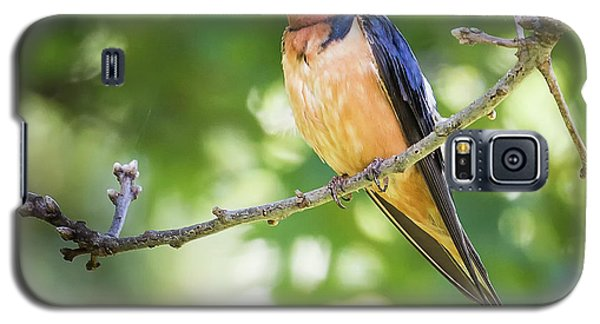 Barn Swallow  Galaxy S5 Case