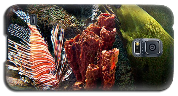Barnacle Buddies Galaxy S5 Case by Bill Pevlor