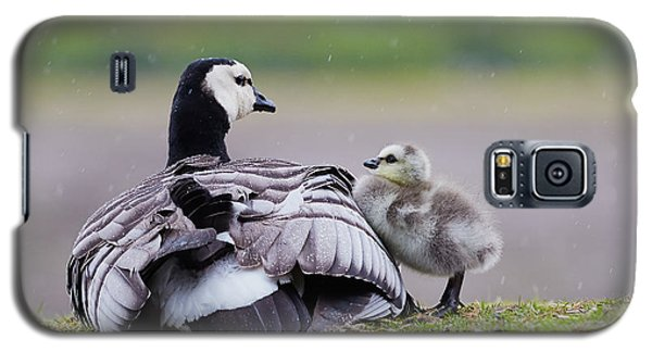 Barnacle Goose With Chick In The Rain Galaxy S5 Case