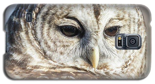 Barred Owl 1 Galaxy S5 Case