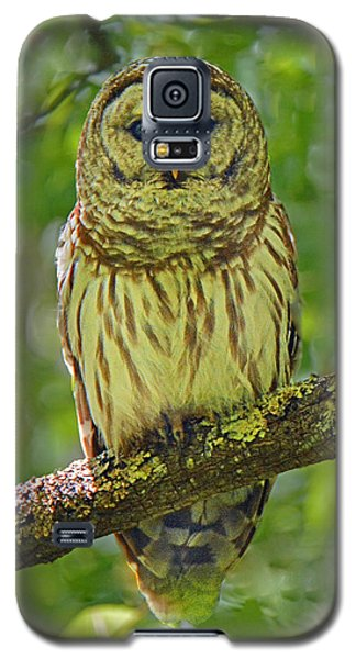 Barred Owl Galaxy S5 Case by Alan Lenk