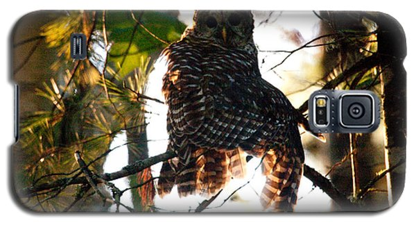 Barred Owl At Sunrise Galaxy S5 Case