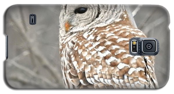 Barred Owl Close-up Galaxy S5 Case by Kathy M Krause