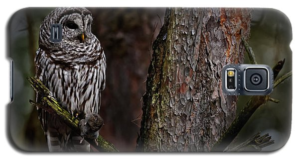 Galaxy S5 Case featuring the photograph Barred Owl In Pine Tree by Michael Cummings