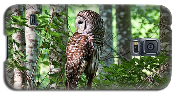 Barred Owl In The Alder Tree Forest Galaxy S5 Case