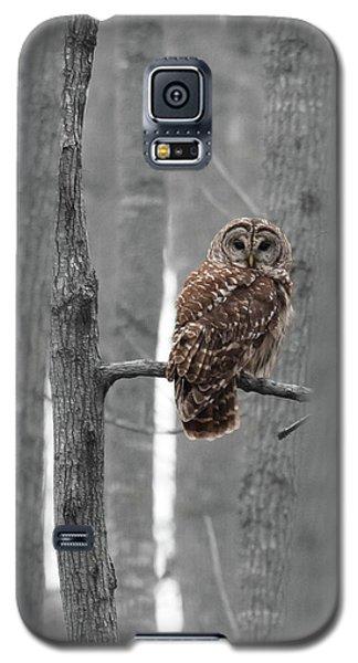 Barred Owl In Winter Woods #1 Galaxy S5 Case