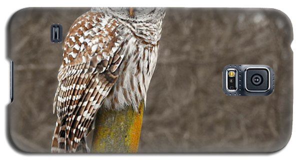 Barred Owl Galaxy S5 Case by Kathy M Krause
