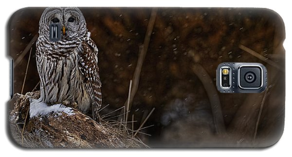 Galaxy S5 Case featuring the photograph Barred Owl On Log by Michael Cummings