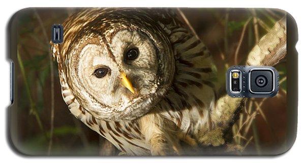 Barred Owl Peering Galaxy S5 Case