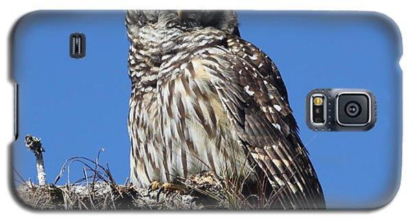 Barred Owl Portrait Galaxy S5 Case