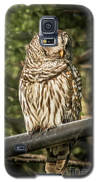 Barred Owl Galaxy S5 Case by Robert Frederick