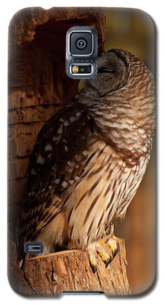 Barred Owl Sleeping In A Tree Galaxy S5 Case by Chris Flees