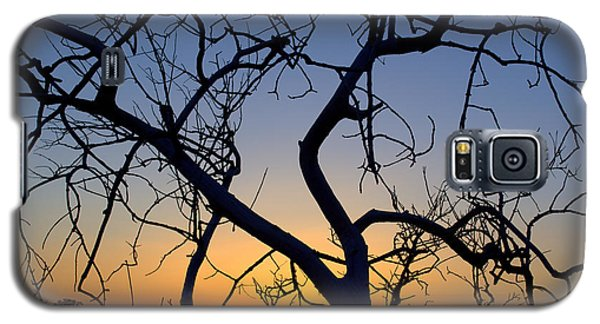 Galaxy S5 Case featuring the photograph Barren Tree At Sunset by Lori Seaman