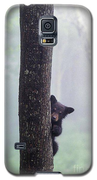 Bashful Bear Cub - Fs000230 Galaxy S5 Case
