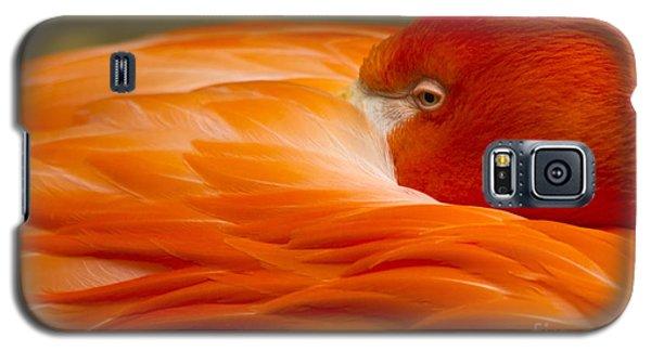 Bashful Flamingo Galaxy S5 Case