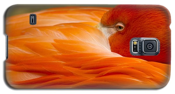 Bashful Flamingo Galaxy S5 Case
