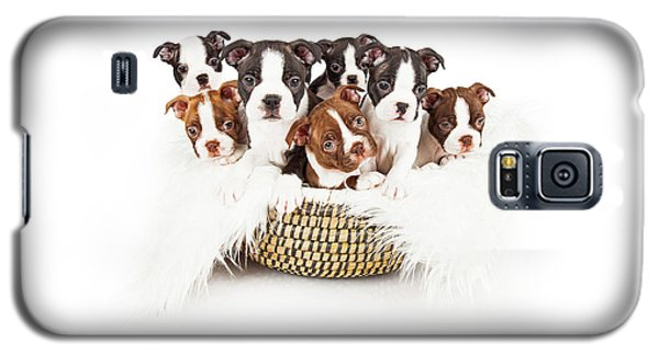 Basket Of Boston Terrier Puppies Galaxy S5 Case