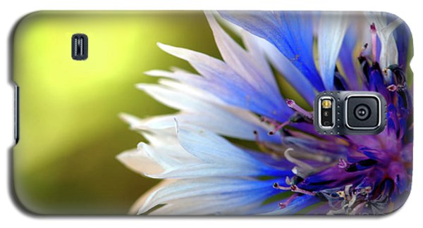 Batchelors Blue And White Button Galaxy S5 Case