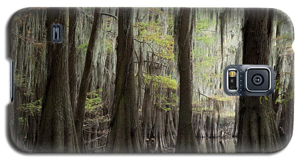 Bayou Trees Galaxy S5 Case