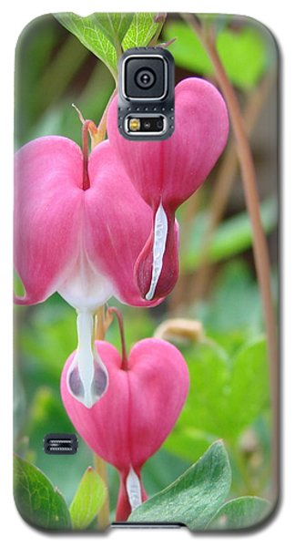 Galaxy S5 Case featuring the photograph Be Still My Little Bleeding Heart by Margaret Bobb