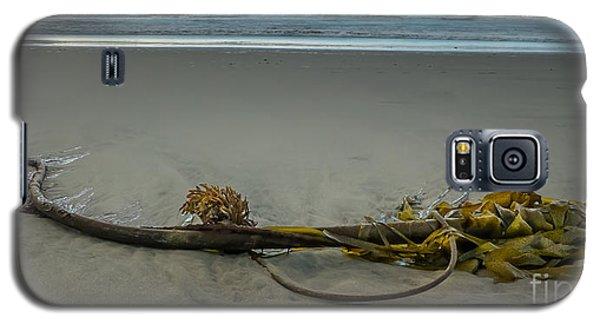 Beach Bull Kelp Laying Solo Galaxy S5 Case