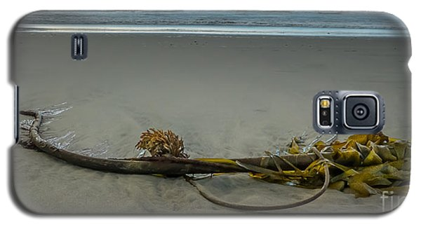 Beach Bull Kelp Laying Solo Galaxy S5 Case