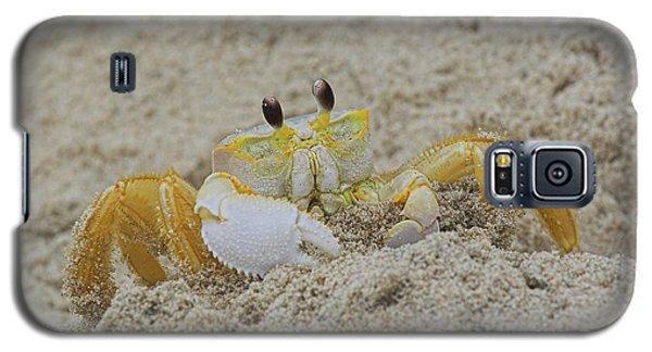 Beach Crab In Sand Galaxy S5 Case by Randy Steele