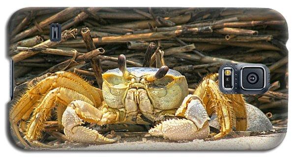 Beach Crab Galaxy S5 Case