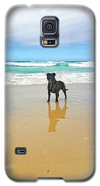 Galaxy S5 Case featuring the photograph Beach Dog And Reflection By Kaye Menner by Kaye Menner