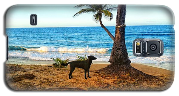 Beach Dog  Galaxy S5 Case