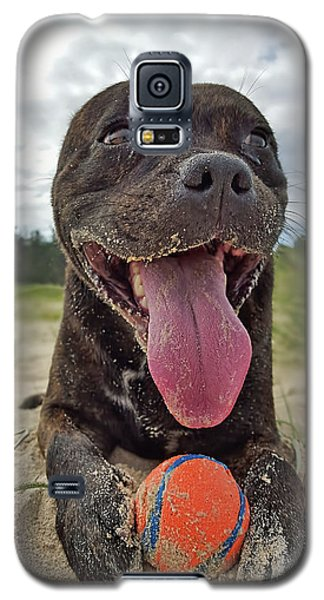 Galaxy S5 Case featuring the photograph Beach Dog - More Play? By Kaye Menner by Kaye Menner