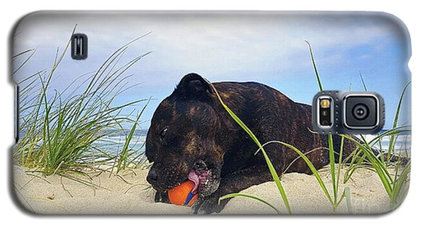 Galaxy S5 Case featuring the photograph Beach Dog - Rest Time By Kaye Menner by Kaye Menner