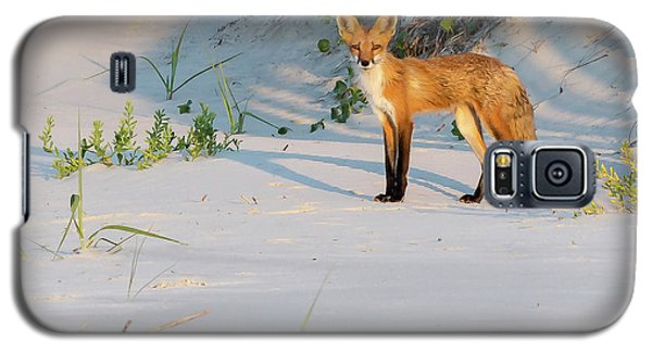 Beach Fox #3 Galaxy S5 Case