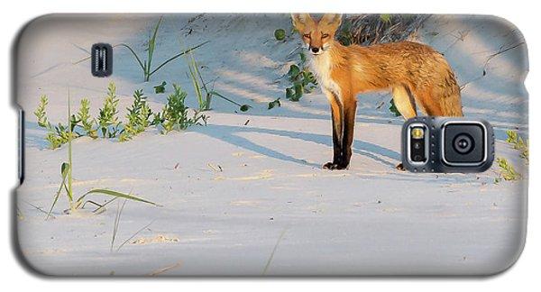 Beach Fox #3 Galaxy S5 Case