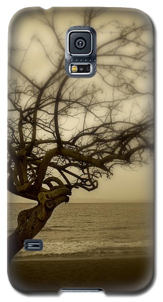 Beach Tree Galaxy S5 Case