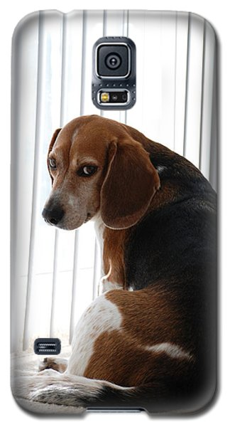 Galaxy S5 Case featuring the photograph Beagle Attitude by Jennifer Ancker