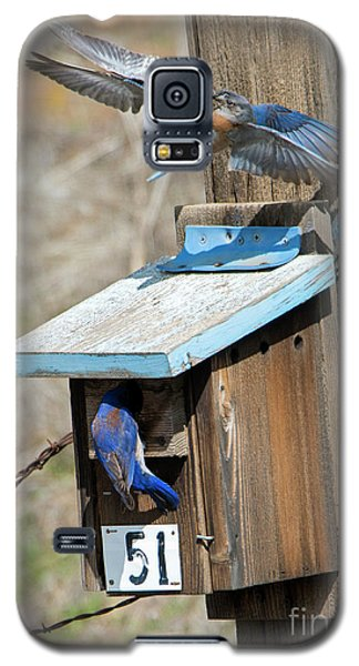 Galaxy S5 Case featuring the photograph Beak To Beak by Mike Dawson