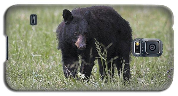 Bear Cub With Apple Galaxy S5 Case